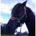 Koňské potřeby