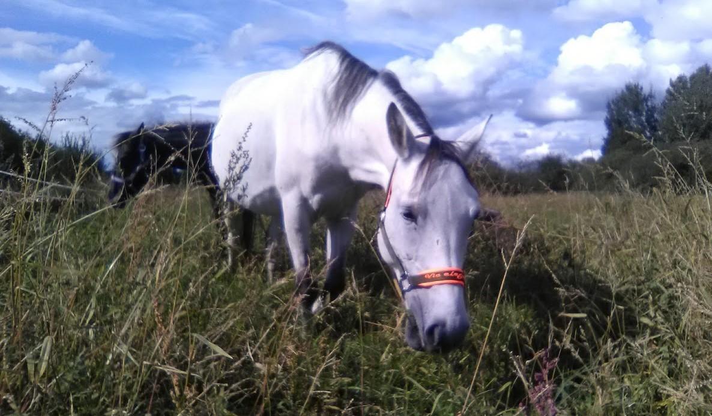 equestrian-needs